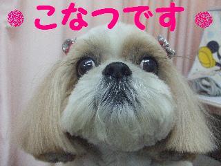 2007_1208こなつちゃん