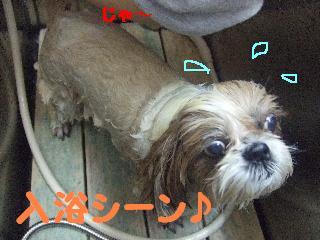 2007_1208こなつちゃん2