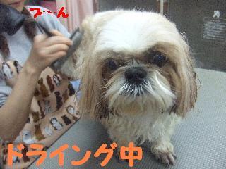 2007_1208こなつちゃん4