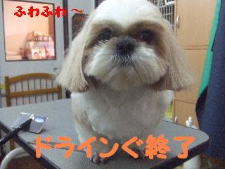 2007_1208こなつちゃん6