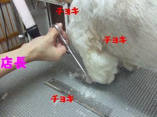 2007_1208こなつちゃん9