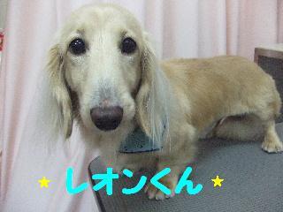 2007_1211レオンくん