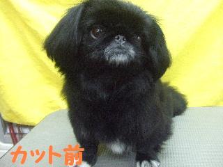 2007_1211マロンちゃん1
