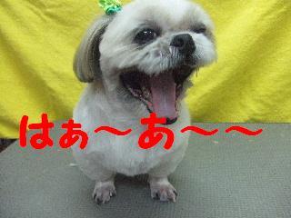 2007_1211ブンタくん4