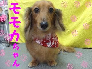 2007_1216モモカちゃん1
