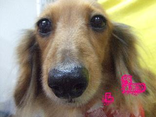 2007_1216モモカちゃん