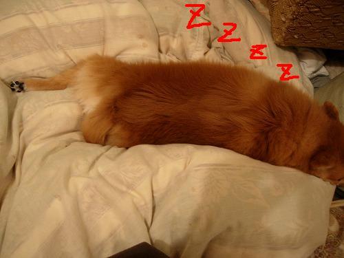 足伸ばし睡眠チム