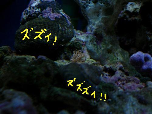 貝に挟まれアザミ
