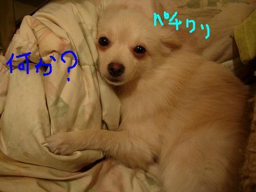 癒し犬ララァ