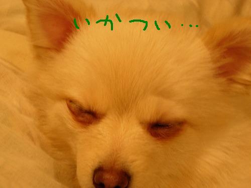 ララァ眠る