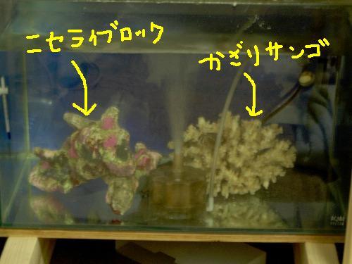 海水槽その2