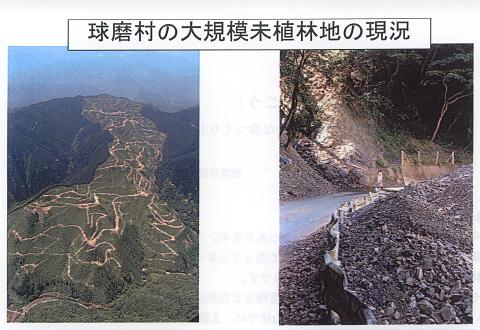 球磨村の大規模未植林地