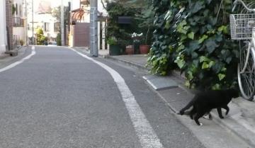080103cats1.jpg