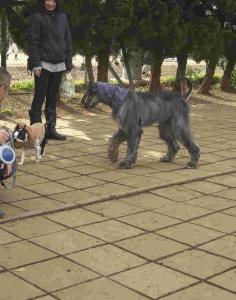 Dog Run 3