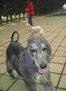 Dog Run 4