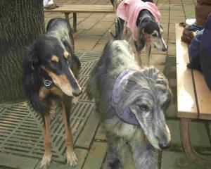 Dog Run 1