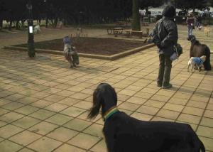 Dog Run 6