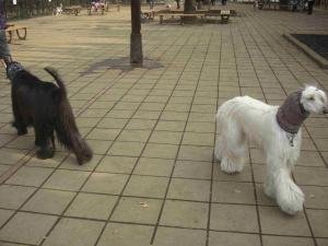 Dog Run 9