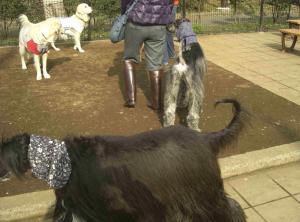 Dog Run 8