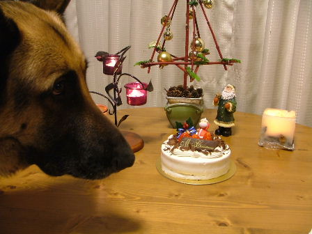 ケーキを狙うボン君。。