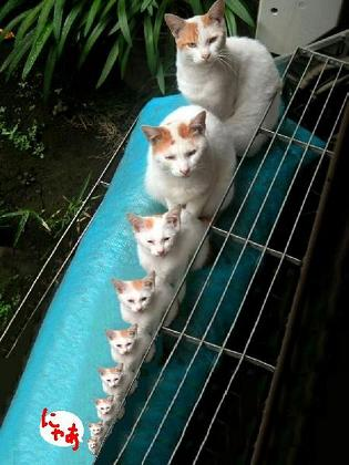 cat0319.jpg