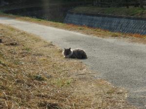 20071202猫