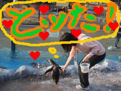 penguin_sawaru_convert_20080326160357.jpg