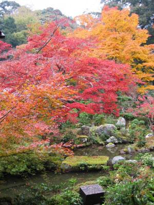 実相院 池と紅葉