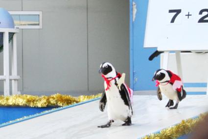 ペンギンしょー