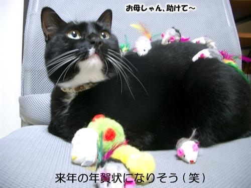 ネズミちゃんと遊ぼ13
