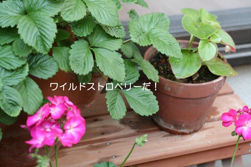 お花たち2