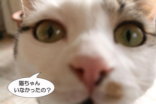 猫の匂いなし13
