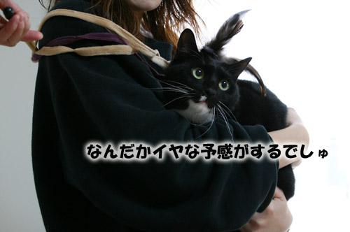 ソルトちゃん2