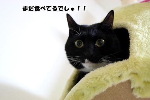 ソルトちゃん7