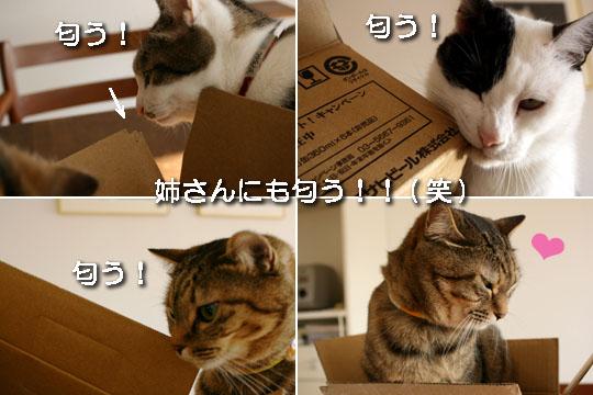 みんな箱に夢中1