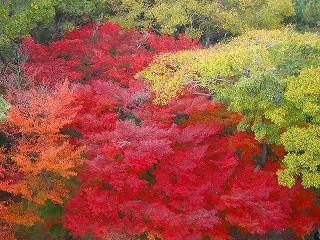 山門の上から見た紅葉