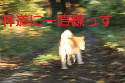 20071114114308.jpg