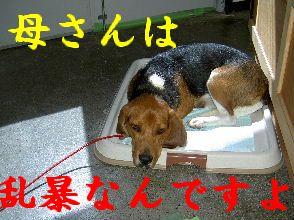 PICT1787-wc.jpg