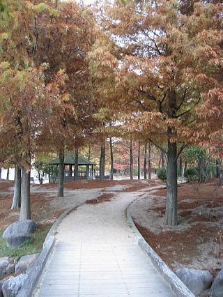 公園の木も冬仕度