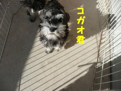 コガオ2008.01.01-s