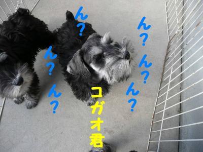コガオ2008.01.01-2-s