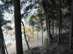 この鬱蒼とした森で半日過ごしました。