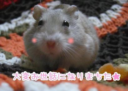加工ショコラ12.31①①