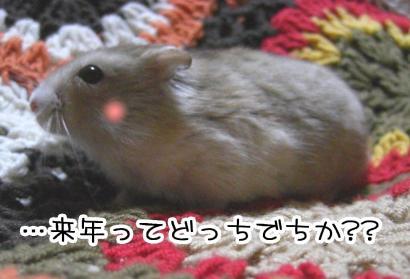 加工ショコラ12.31②②