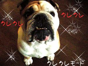 bull216.jpg