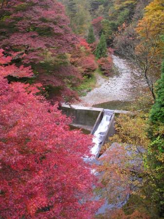 東大芦川の紅葉