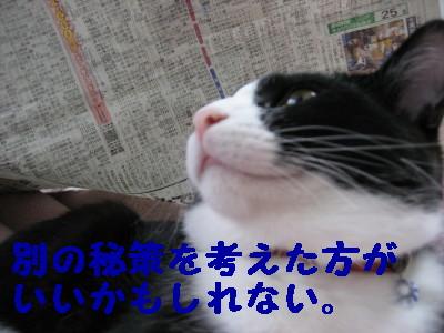 20070418124909.jpg