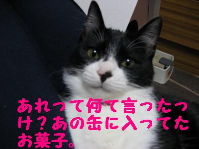 20070420113740.jpg