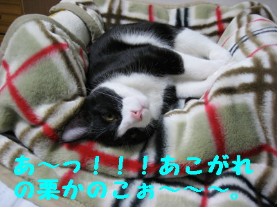 20070420113846.jpg