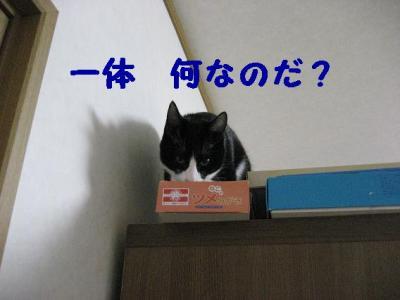 20070421144511.jpg